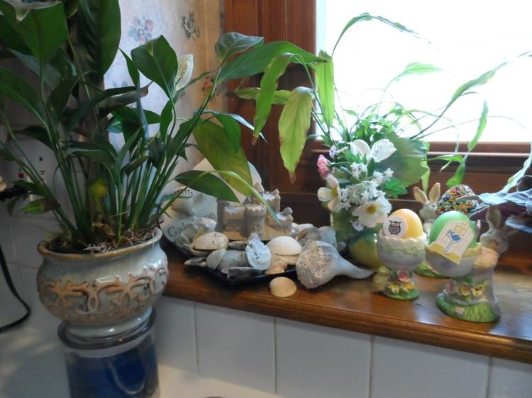Fensterdeko Ideen Küche Zimmerpflanzen Muschel Steine