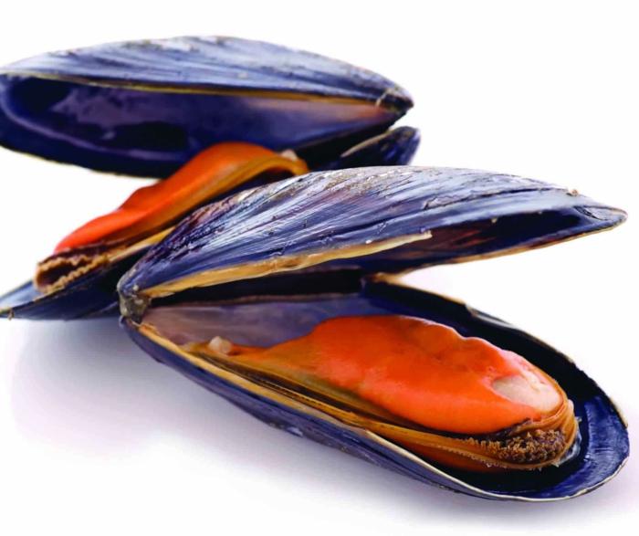 Muscheln kochen nah italienisch schwarz roh gekocht