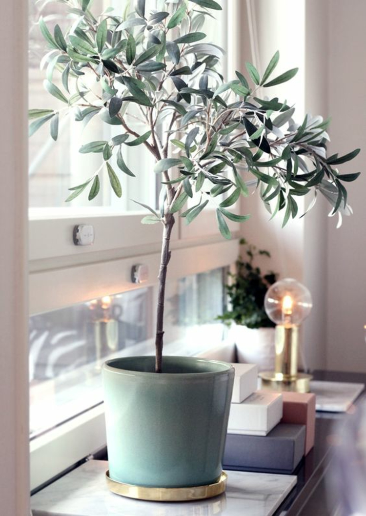 Wohnung einrichten Tipps Fensterbrett Zimmerpflanzen Olivenbäumchen