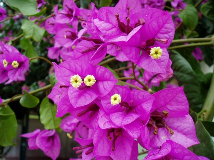 21 Balkonpflanzen, Die Zu Ihrem Eingenen Balkon Passen Balkonpflanzen Fur Sonnigen Balkon