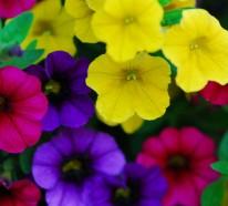 21 Balkonpflanzen Die Zu Ihrem Eingenen Balkon Passen