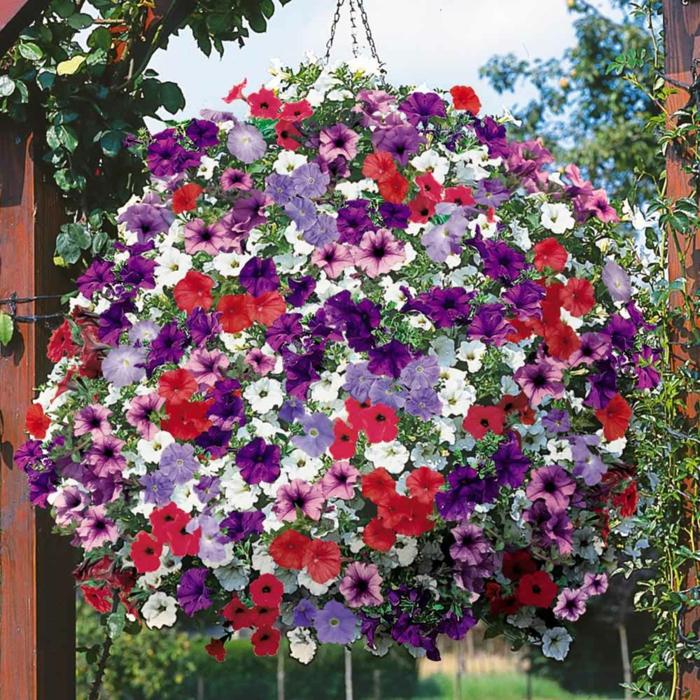 balkonpflanzen sonnig blumenampel hängeblumen petunien