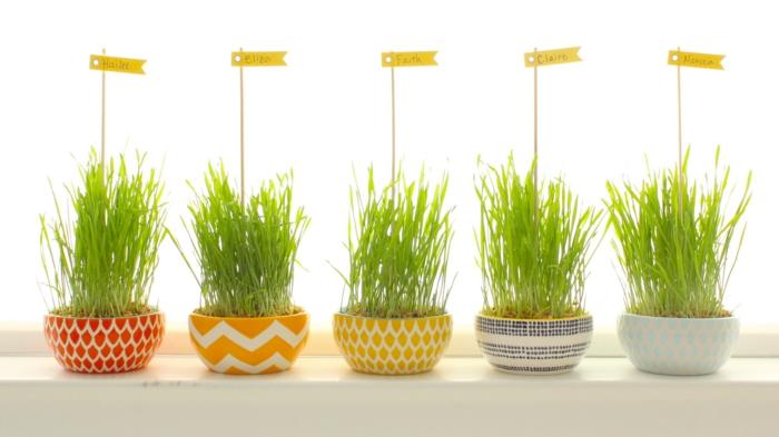 dekoideen fensterbank pflanzenbehälter namen wohnideen