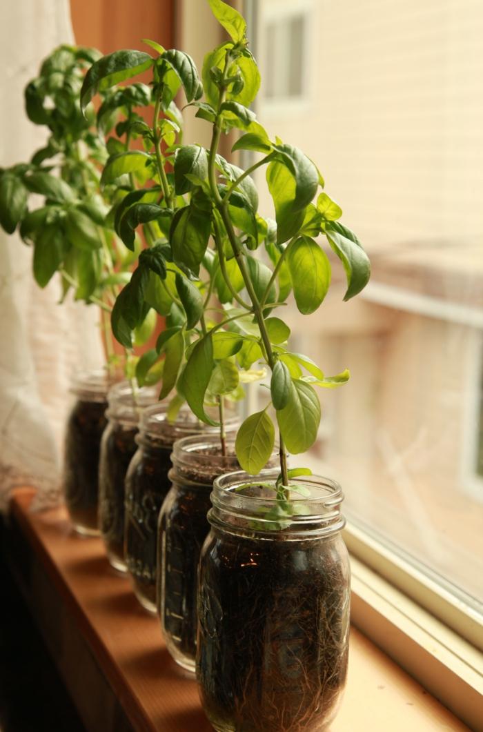 fensterbank dekoration pflanzen einmachgläser funktional
