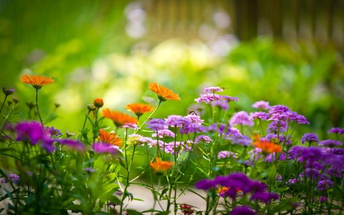 garten ideen ungeziefer insekten sommer