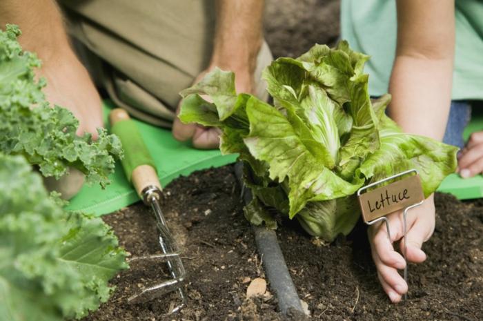 gartencenter gartengestaltung gartenarbeit salate anbauen plastik handschuhe