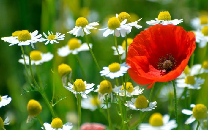 Gartengestaltung bliche fehler welche man begeht for Gartengestaltung nach farben