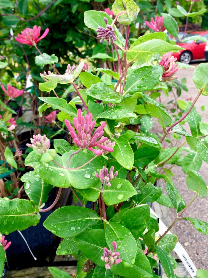 gartengestaltung garten pflanzen blumen lila schöne blätter