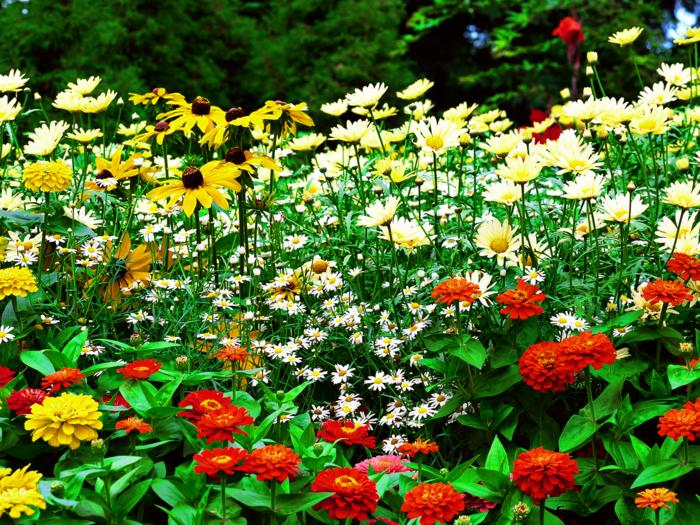 gartengestaltung gartenpflanzen farbige blumen