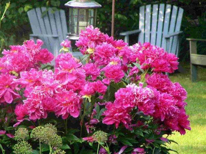 gartenideen blumen einpflanzen farbig schön