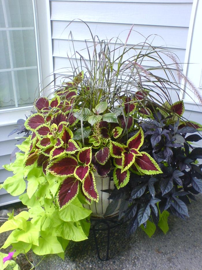 Gartengestaltung bliche fehler welche man begeht - Topfpflanzen garten ...