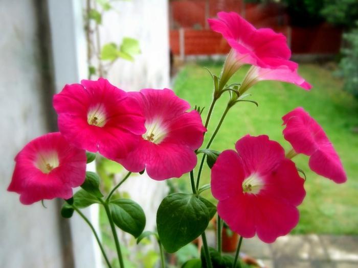 gartenideen garten pflanzen schöne farben