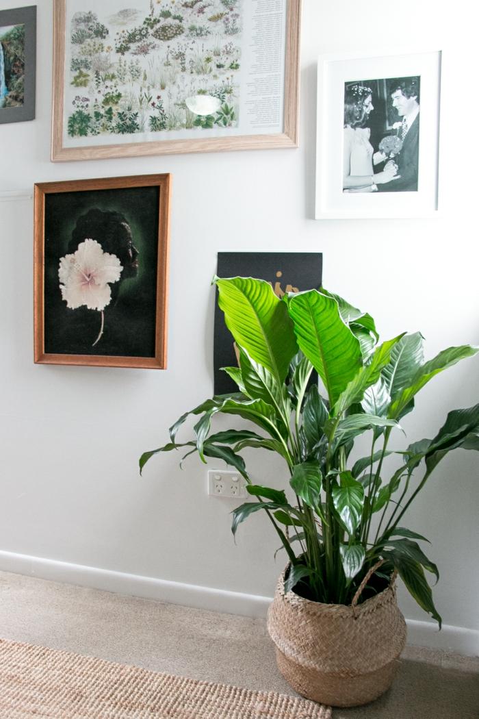 Mit Zimmerpflanzen das Zuhause dekorieren - 60 Beispiele ...