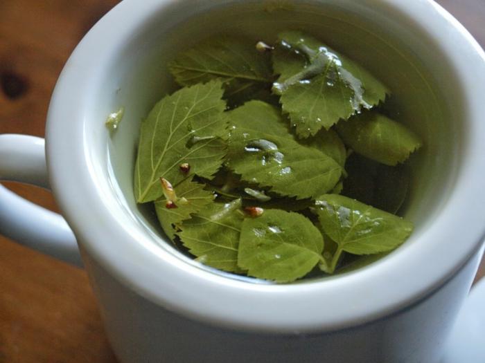 tee gesund birkentee zubereiten kräuter gesundes essen