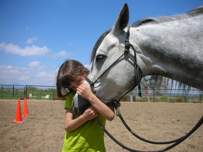therapeutisches reiten vertrauen aufbauen prefekter sommer reiterhof