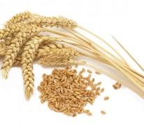 Glutenfreie Lebensmittel: Was ist Gluten und wie kann man es ersetzen?