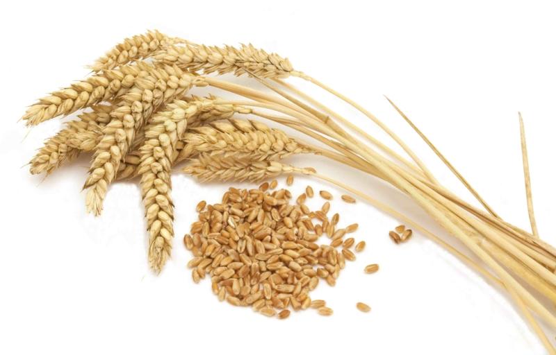 was ist gluten wo ist Gluten drin Weizen Roggen Futtergerste Hafer