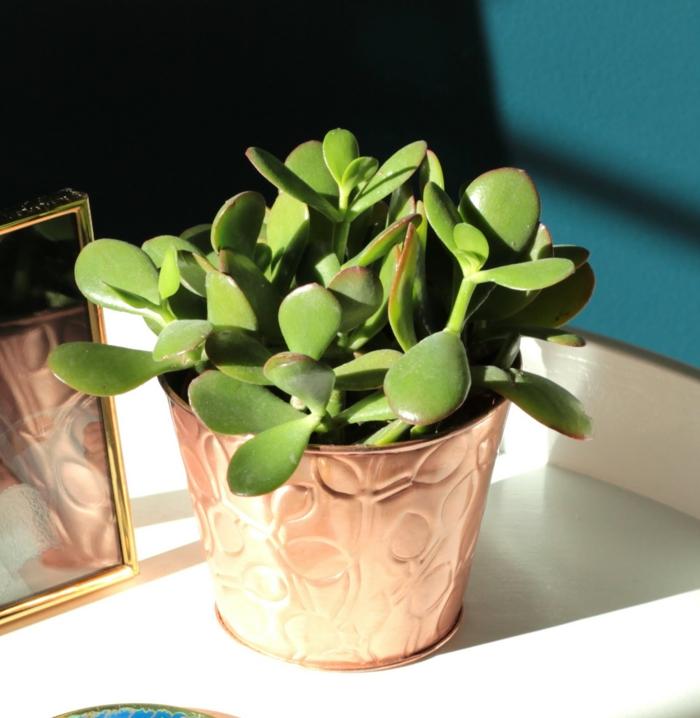 Mit zimmerpflanzen das zuhause dekorieren 60 beispiele for Wohnung pflanzen