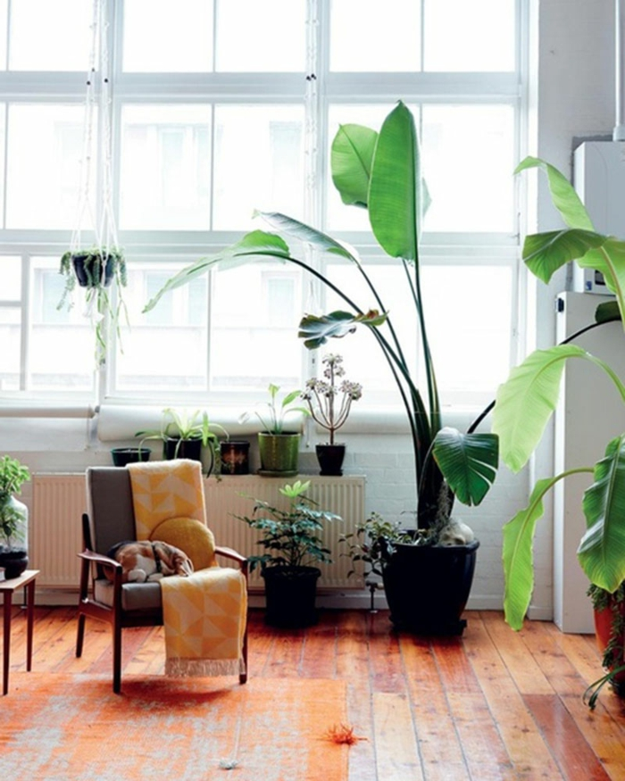 Mit Zimmerpflanzen Das Zuhause Dekorieren - 60 Beispiele, Wie Sie ... Zimmerpflanzen Wohnideen