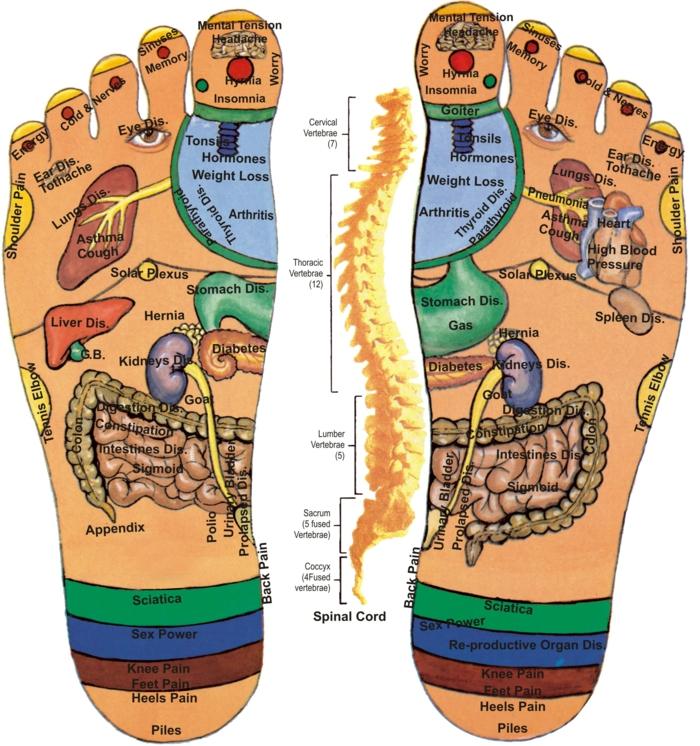akupressur lebe gesund gesund leben heilpraxis massage akupressur zonen fuß