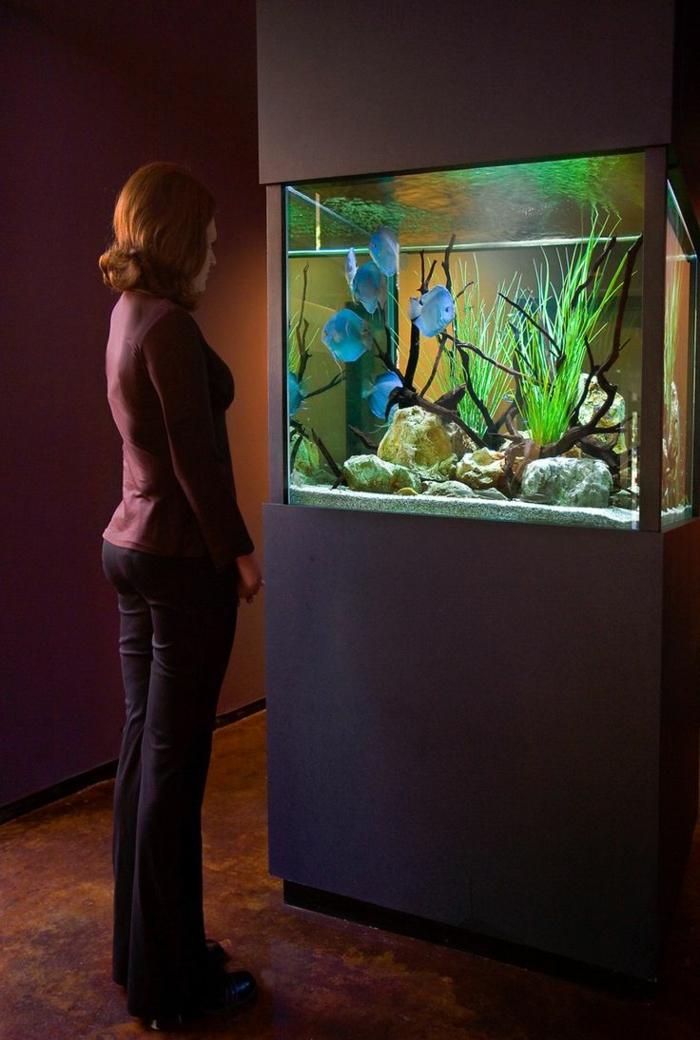 aquarium eirichten design atmosphäre einrichtungsbeispiele licht