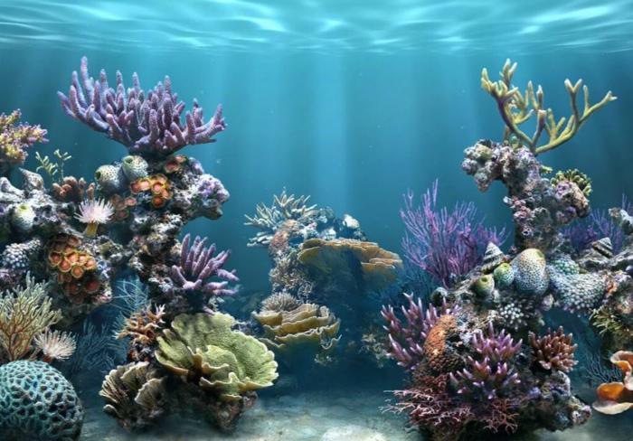 aquarium eirichten design atmosphäre einrichtungsbeispiele wandgestaltung