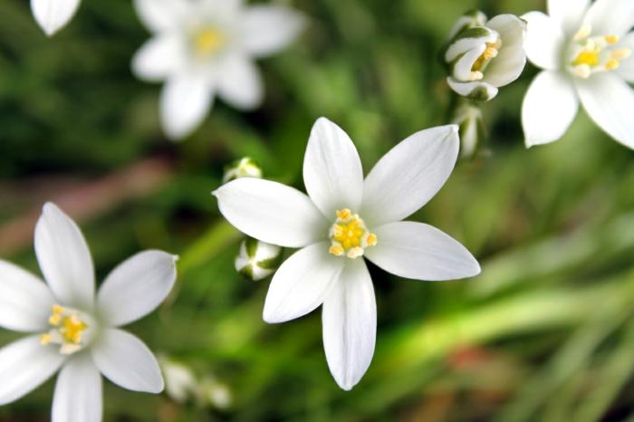 bachblüten wirkung holsistische heilung heilpraxis studioaufnahme bethleem