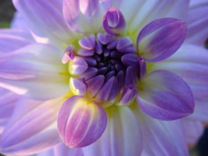 bachblüten wirkung holsistische heilung heilpraxis studioaufnahme entspannung in flaschen emotionale heilung