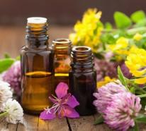 Bachblüten Wirkung in der Heilpraxis