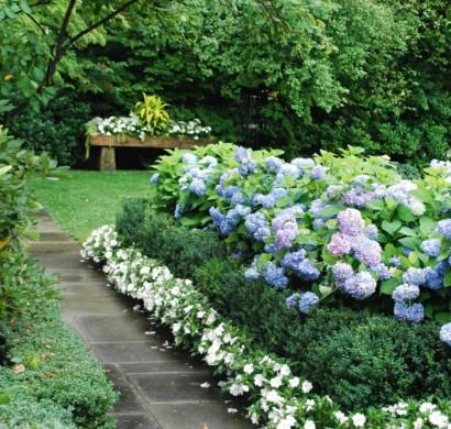 Mit hortensien akzente im garten setzen for Gartengestaltung mit buchs und hortensien