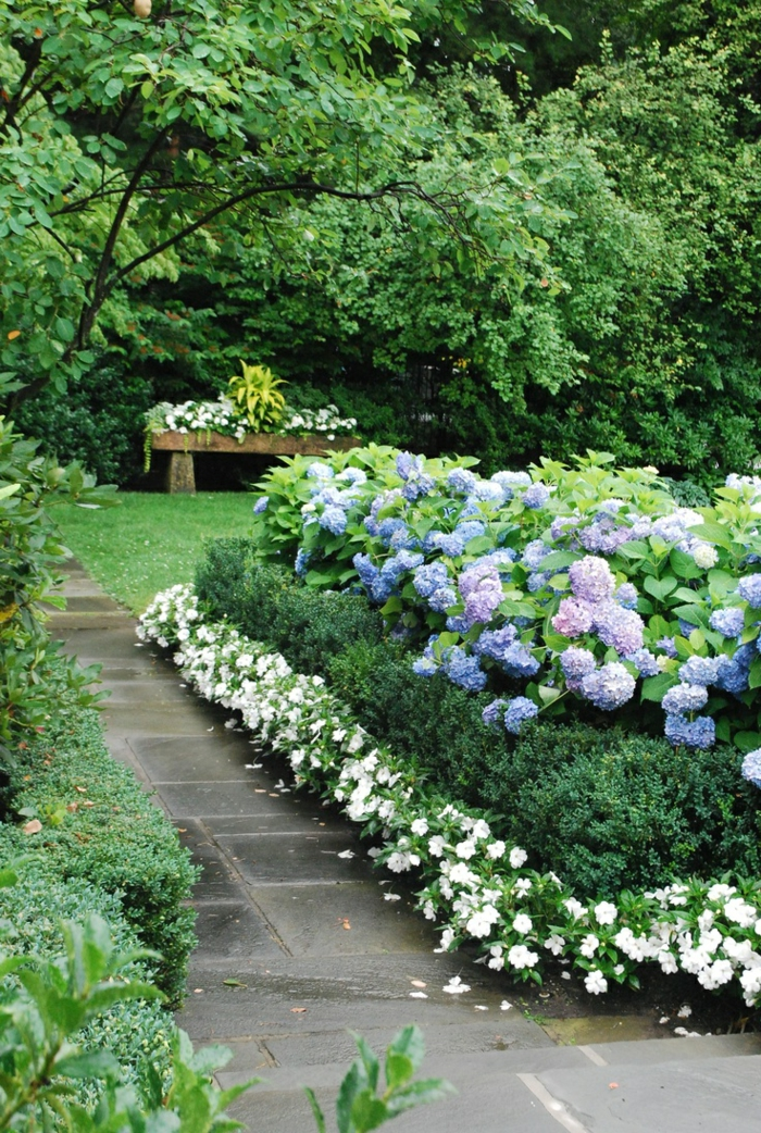 gartenpflanzen hortensie gartenblume schöne gartengestaltung