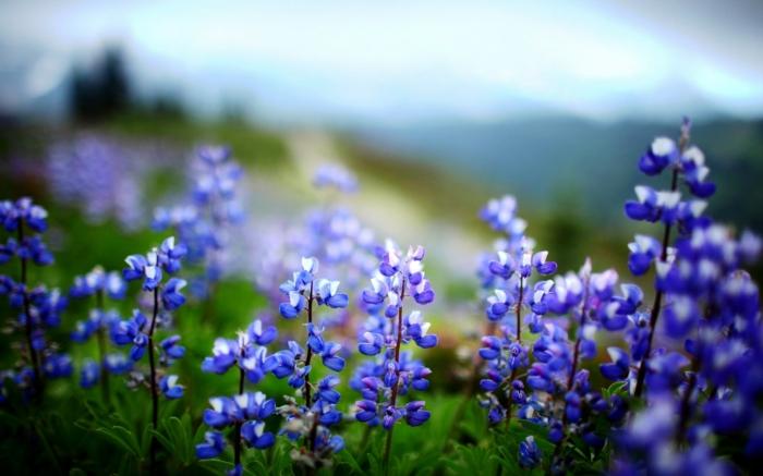 gesund leben blaue blüten winzig charmant