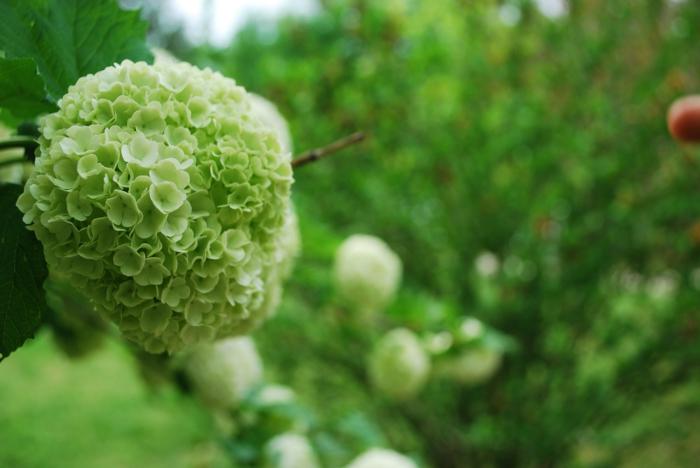 gesund leben grüne blumen bedeutung wirkung