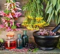 Gesunde Kräuter – Wissenswertes über deren richtige Anwendung
