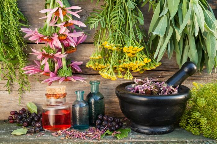 gesund leben kräuter gesundheit lifestyle