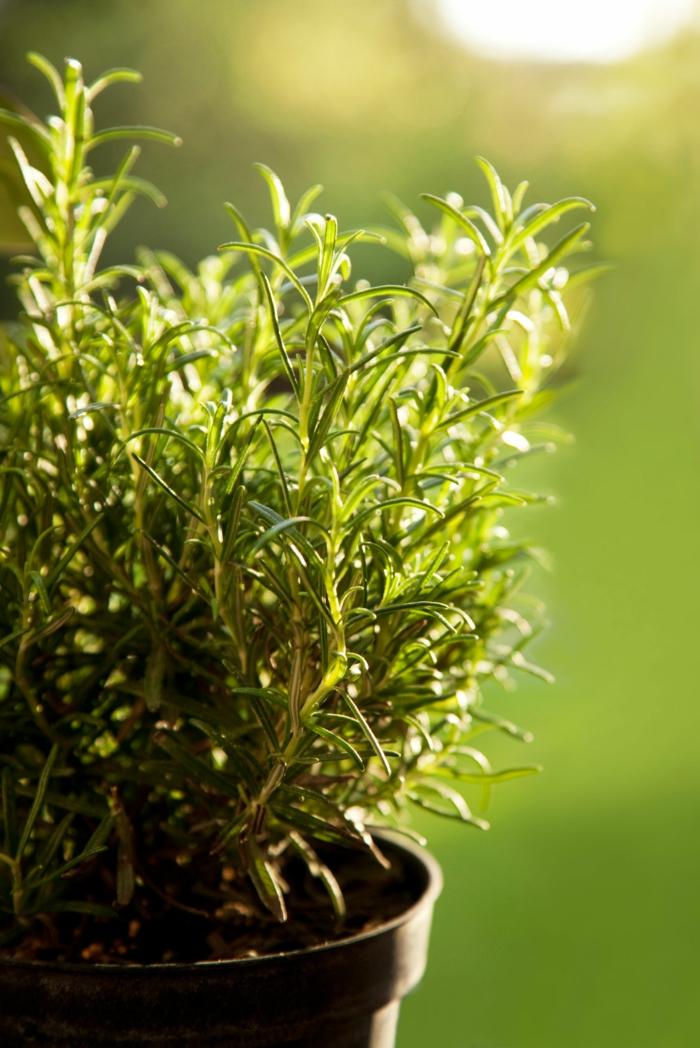 gesund leben kräuter züchten blumentopf