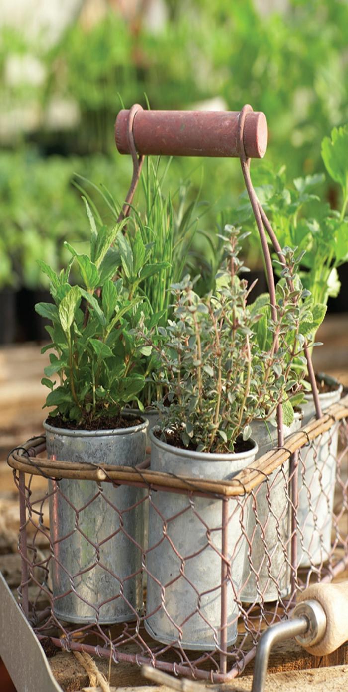 gesund leben kräuter züchten trocknen tipps