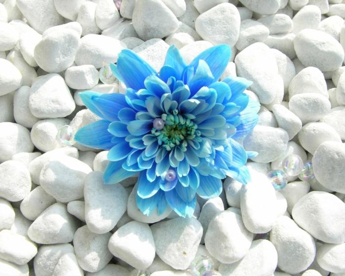 gesund leben phytotherapie blaue blüte weiße steine