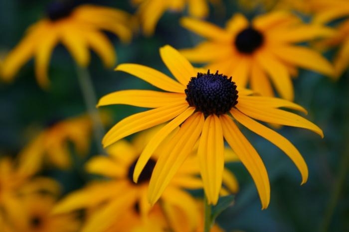 gesund leben phytotherapie blumenwirkung gelb