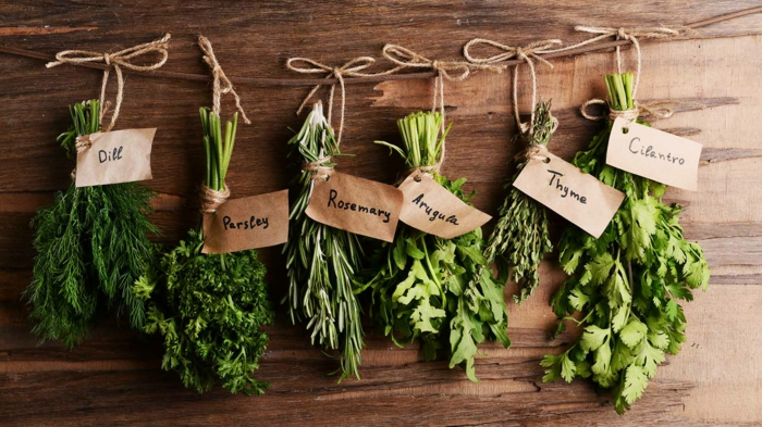 gesunde kräuter gesundes leben tipps
