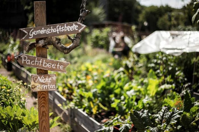 hochbeet bauen beflanzen gartenideen diy ideen holz vorgarten himmelbeet berlin1