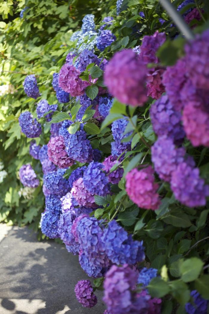 Mit hortensien akzente im garten setzen for Garten pflanzen blumen