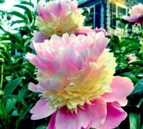 Gesund leben mit der Blüten-/ Phytotherapie – Wissenswerte Tatsachen und Tipps
