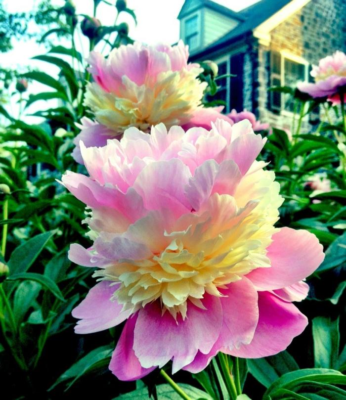 lebe gesund blütentherapie farben wirkung