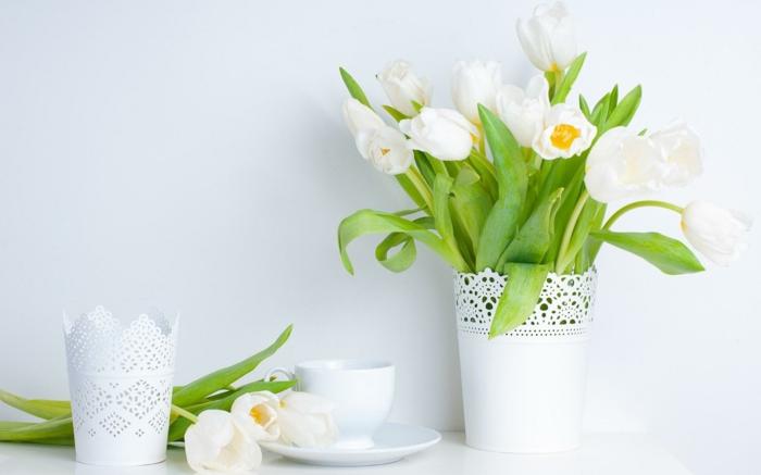 lebe gesund weiße tulpen weiß wirkung organismus phytotherapie