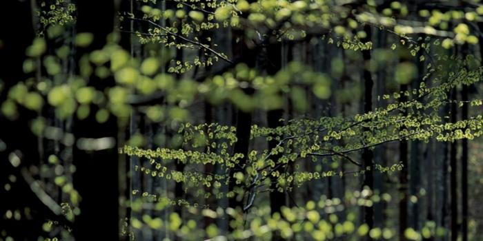 nachhaltige mode ökologische kleidung bio kleidung buchenfase lenzing modal