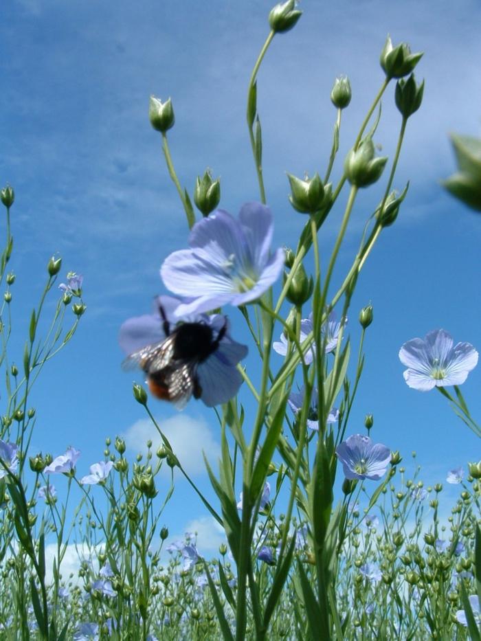 nachhaltige mode ökologische kleidung bio kleidung lein organisch