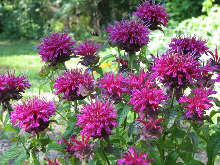 gartenblumen die ihrem garten mehr charme im sommer verleihen. Black Bedroom Furniture Sets. Home Design Ideas