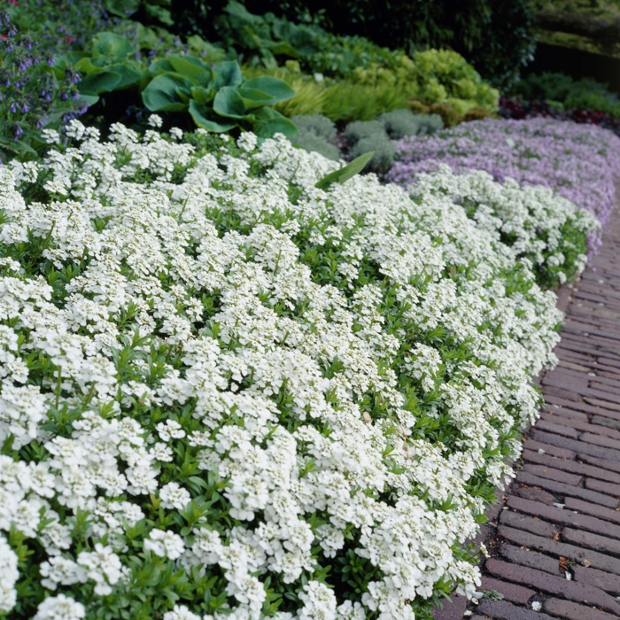 gartenblumen sommer gartenideen gartenpflanzen gartengestaltung ideen