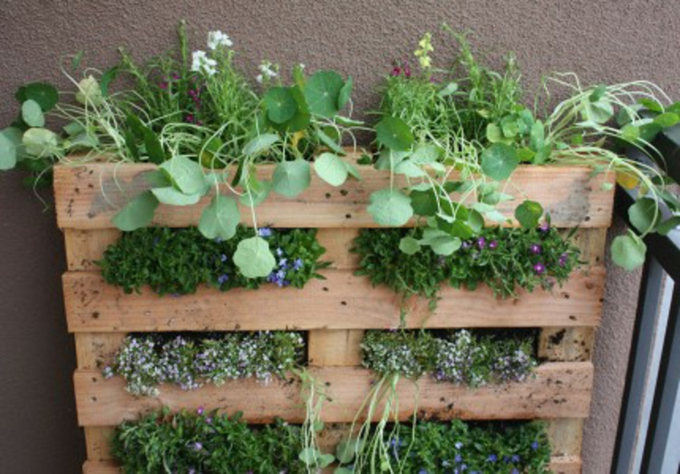 vertikalen Garten selber machen Anleitung vertikale Begrünung DIY Projekte